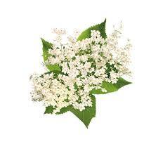 Elderflower Fizz